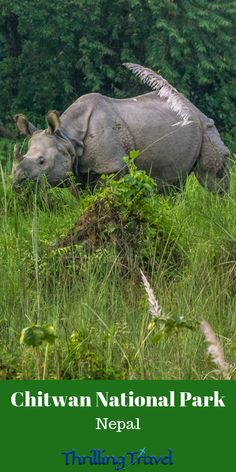 A UNESCO World Heritage Site amid Churia Hills, Chitwan National Park is home to One Horned Rhinos, Ghariyals & Royal Bengal Tigers. A travel guide to it. Africa Travel, India Travel, Travel Nepal, Myanmar Travel, Travel Articles, Travel Tips, Travel Guides, Travel Advice, Solo Travel