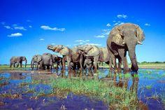 Etosha Natonal Park, Namibia - Herd of elephants