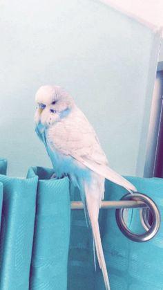 blue.......