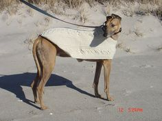 That's my handsome Presto modeling my first sweater pattern, crochet Greyhound Fisherman Coat by GreyhoundCrafts.com