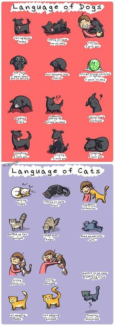 Language of dogs and cats. My dog gives me the paw = I need something NOW