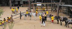 Coneixer els rucs. - Conocer a los burros. - Know the donkeys. Cortesía de Rucs del Corredor, Canyamars (Barcelona)