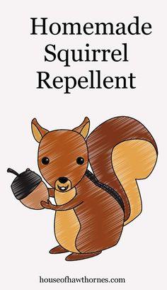 11 Best Squirrel Repellant Images Squirrel Repellant