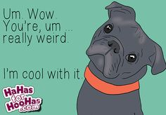 When Tucker looks at us, I swear this is what he is thinking. Relationship Ecards, I Like You, Animal Pictures, Weird, Funny Women, Sketches, Creatures, Family Guy, Drawings
