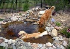 """DIY dog pond for those hot summer days! Wonderful to read on """"Visit Site"""" scr… DIY dog pond for those hot summer days! Wonderful to read on """"Visit Site"""" scroll down to see pond ~ playground outdoor diy Dog Friendly Backyard, Dog Pond, Dog Playground, Outdoor Playground, Parcs, Dog Houses, Dog Friends, Dog Life, Backyard Ideas"""