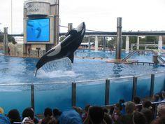 SeaWorld Orlando, Shamu Rocks America!