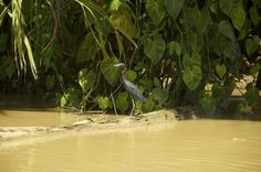 Fotografía: Destinos Reps - Canales Moín - (Costa Rica) Rafting, Costa Rica, Animals, Crocodiles, Whales, Volcanoes, Destinations, Woods, Beach