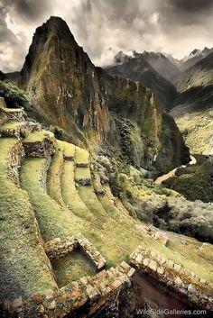 Michu Pichu