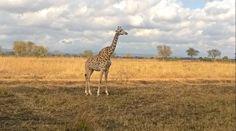 -Safari, Tanzania 2014-
