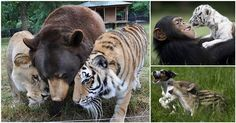 """15 of the Most Unusual Animal Friendships that will Melt your Heart (From """"Uncle"""" George Takei!)"""