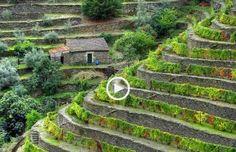Magnífica Viagem pelo Douro!