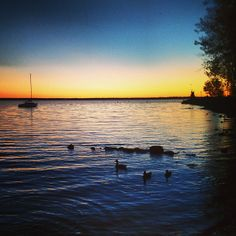 "See 69 photos and 7 tips from 275 visitors to Aylmer Marina D'Aylmer. ""Great views, on the bay, the jetty, and on the patio! Weekends Away, Great View, Ottawa, Getting Out, Canada, Boat, Sunset, Explore, Places"