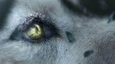 She Wolf (Falling To Pieces) - David Guetta