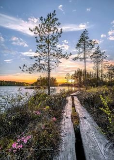 🇫🇮 Boardwalk by lake (Finland) by Asko Kuittinen cr. Scenery Photography, Landscape Photography, Beauty Around The World, Around The Worlds, Beautiful World, Beautiful Places, Natures Path, Sunset Photos, Mother Nature