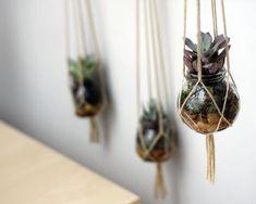 Hängende Blumen-ampel pflanzer indoor garten topf begrünung