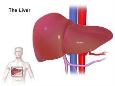 Imaging of Primary Malignant Liver Tumours