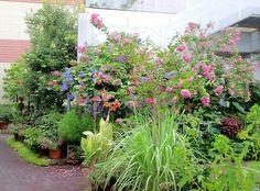 ■ My Vertical garden field・・Lemon grass・・