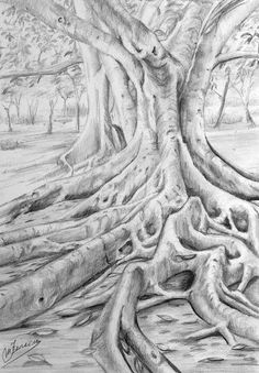Pin by willie nel on drawing trees рисунок, рисунки, графика Pencil Drawings Of Flowers, Pencil Art Drawings, Realistic Drawings, Tree Sketches, Drawing Sketches, Nature Drawing, Landscape Drawings, Disney Concept Art, Drawing Techniques