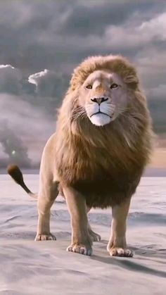 Lion Live Wallpaper, Animal Wallpaper, Lion Images, Lion Pictures, Majestic Animals, Animals Beautiful, Beautiful Lion, Lion King Video, Cute Baby Animals