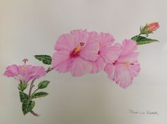 Learn watercolour online with watercolor techniques & advice for creating realistic and botanical paintings with the WOW factor.