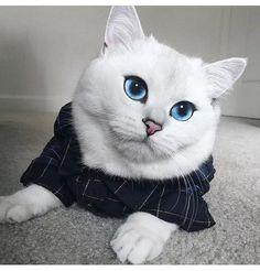 Photo - Google+ Beautiful blue eyes!