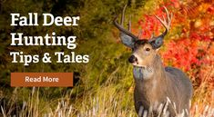 Trees That Will Hold Deer on Your Hunting Property 10 Trees That Will Hold Deer on Your Hunting Property Dove Hunting, Quail Hunting, Hunting Land, Deer Hunting Tips, Turkey Hunting, Hunting Dogs, Trophy Hunting, Food Plots For Deer, Predator Hunting