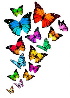 Set of colorful butterflies vector material 10