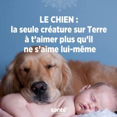 les chiens Plus Plus Animals And Pets, Cute Animals, Pets Online, Amor Animal, Terrier, Cute Friends, Famous Last Words, Love Pet, Cute Love