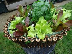 Growing From Seed for Your Kitchen Garden