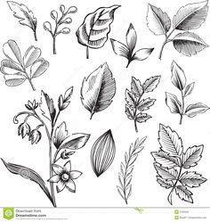 Ornamental Leaves Vector Illustration Black and white artist Botanical illustration black and white Black and white leaves
