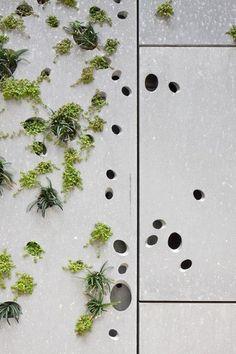 En Detalle: Muro Vegetal para el Museo de San Telmo,© Fernando Alda