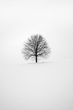 photography of tree photo – Free Black-and-white Image on Unsplash Walpaper Black, Black And White Wallpaper, Black And White Pictures, Black White, Matte Black, White Silk, Cute Wallpapers, Wallpaper Backgrounds, Wallpaper Dekstop