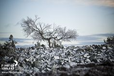 First snow at autumn in Luosto, Finnish Lapland. Photo by Jani Kärppä/ Lappikuva #filmlapland #arcticshooting #finlandlapland