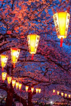 Sakura Festival, Japan