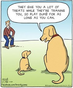 "They give you a lot of treats while they're training you, so play dumb for as long as you can. More Ha Ha! Funny!   LOL!…Don't forget to click ""Like"" on the page and also please share it with your friends."
