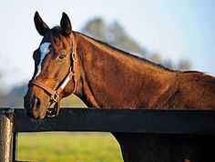 Zenyatta Confirmed in Foal to War Front, June 14, 2013.