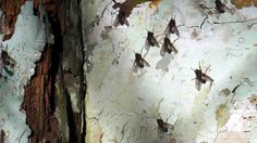 Fly fly fly to the other side. The Other Side, Moth, Abstract, Artwork, Nature, Painting, Animals, Art Work, Naturaleza