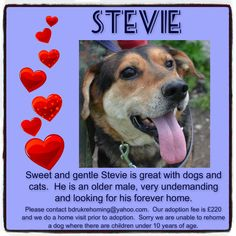 Stevie is blind.  His foster Mum describes him as sweet and loving and very undemanding.  Stevie has been adopted by his foster Mum :-)