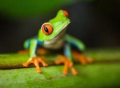 I love tree frogs!