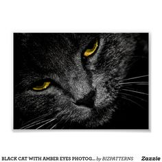BLACK CAT WITH AMBER EYES PHOTOGRAPHIC POSTER White Kittens For Sale, Black And White Kittens, Kitten For Sale, Amber Eyes, Custom Posters, Nature Photography, Vibrant, Pets, Animals