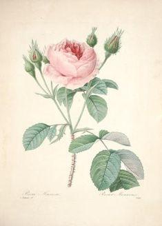 Choix des plus belles fleurs : et des plus beau...