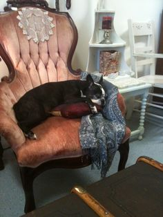 Baby picks the comfy chairs in the store!