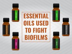 Biofilm: A Shield Lyme Disease Hides Behind Article Summary Lyme disease can be a difficult disease to diagnose and treat. However, it can become even more difficult to remove Lyme from your body if this bacterium starts to protect itself with the use of biofilms. Biofilms are slimy combinations of various substances which attach to…