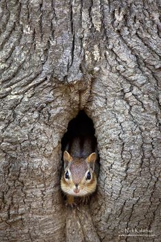 Peekaboo by Nick Kalathas - Nature's Moments on 500px
