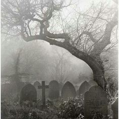 death tree Black and White dark dead cross goth gothic cemetery disturbing graveyard gravestone Dark Side, Old Cemeteries, Graveyards, Cemetery Art, Cemetery Statues, Haunted Places, Belle Photo, Dark Art, Mists