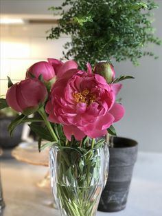 Peonies and spring.