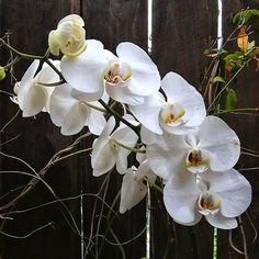 White orchid near dark fence