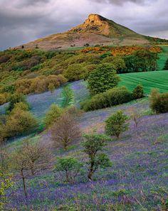 Roseberry bluebells, North Yorkshire
