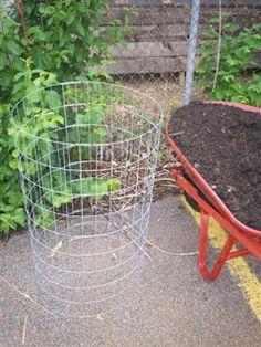 Potato Towers & Living Fence Posts - Urban Farmer of Seward