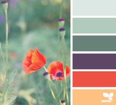 { color garden } image via: @tangledgarden